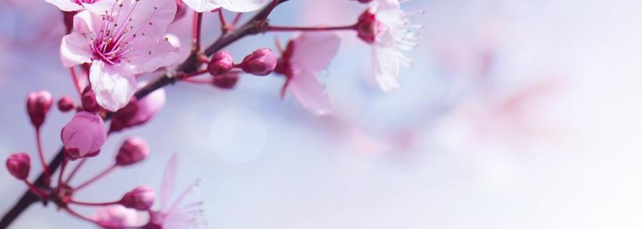 A fleur de pot - A fleur de pot rennes ...